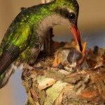 © Daniel Sviech | Salve a Mãe Natureza!